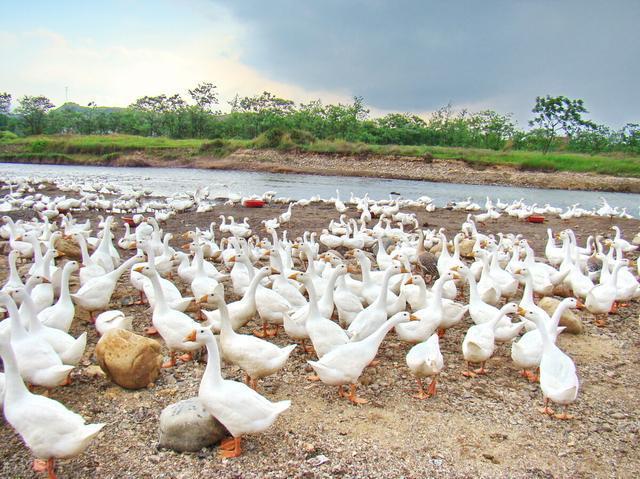 重庆养殖项目补贴介绍